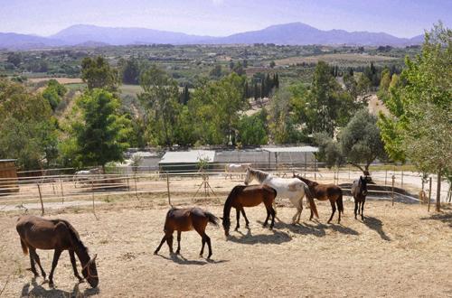 cyd-santa-maria-horses-valley